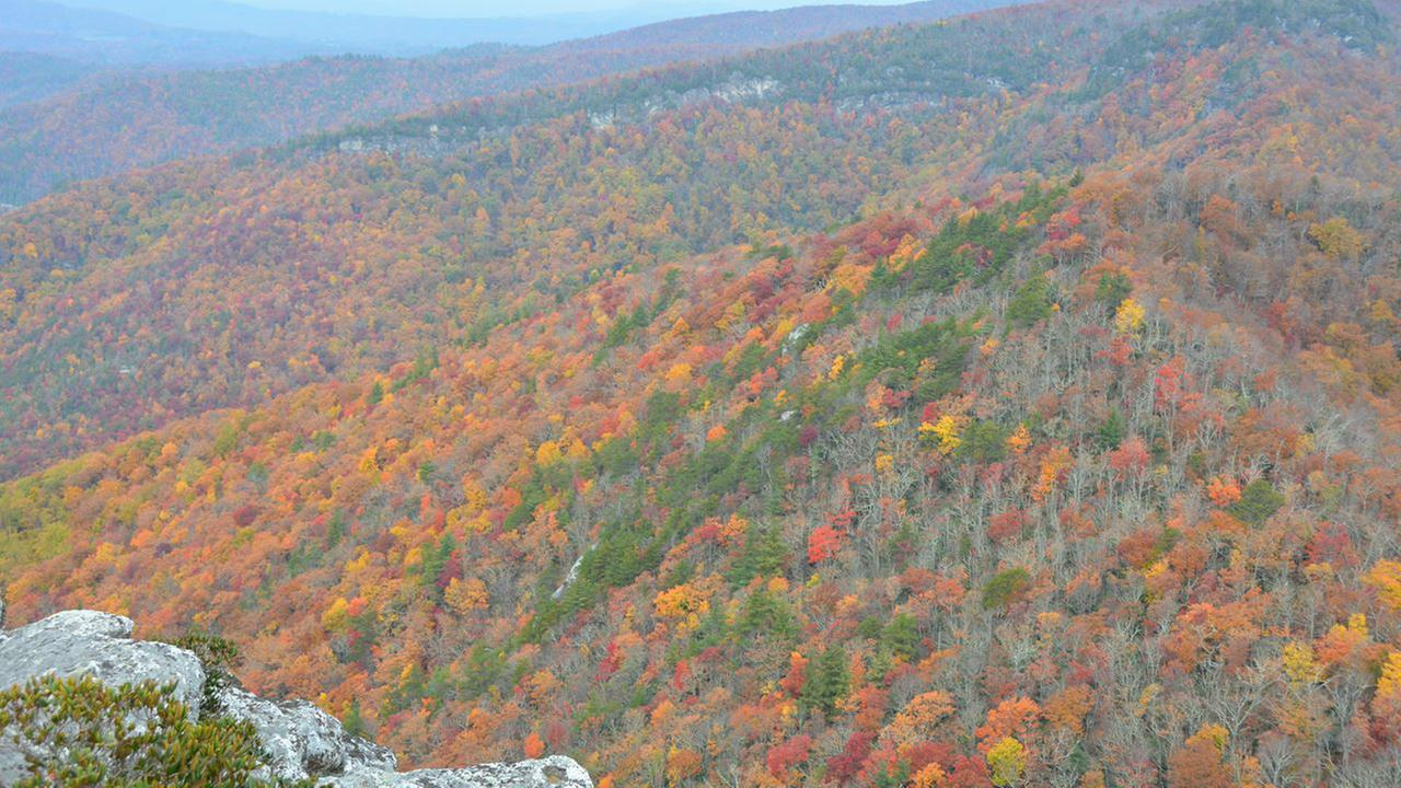 Fall FoliageIan Slack