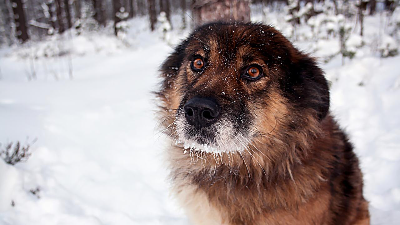 Even furry pets shouldnt be exposed to the sub-freezing temperatures for long.