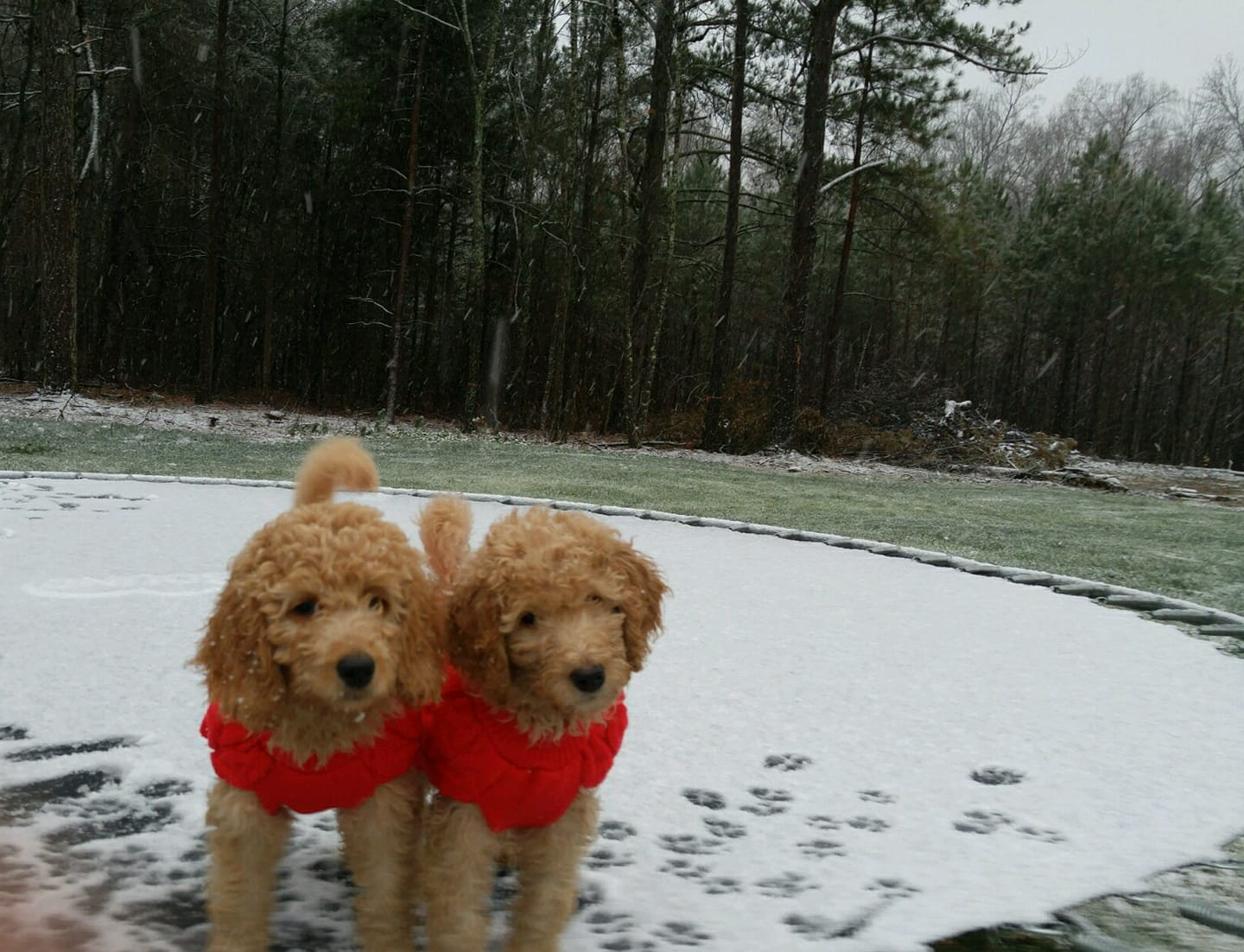<div class='meta'><div class='origin-logo' data-origin='none'></div><span class='caption-text' data-credit='Credit: Sharee Avila'>These pups are ready for the snow</span></div>