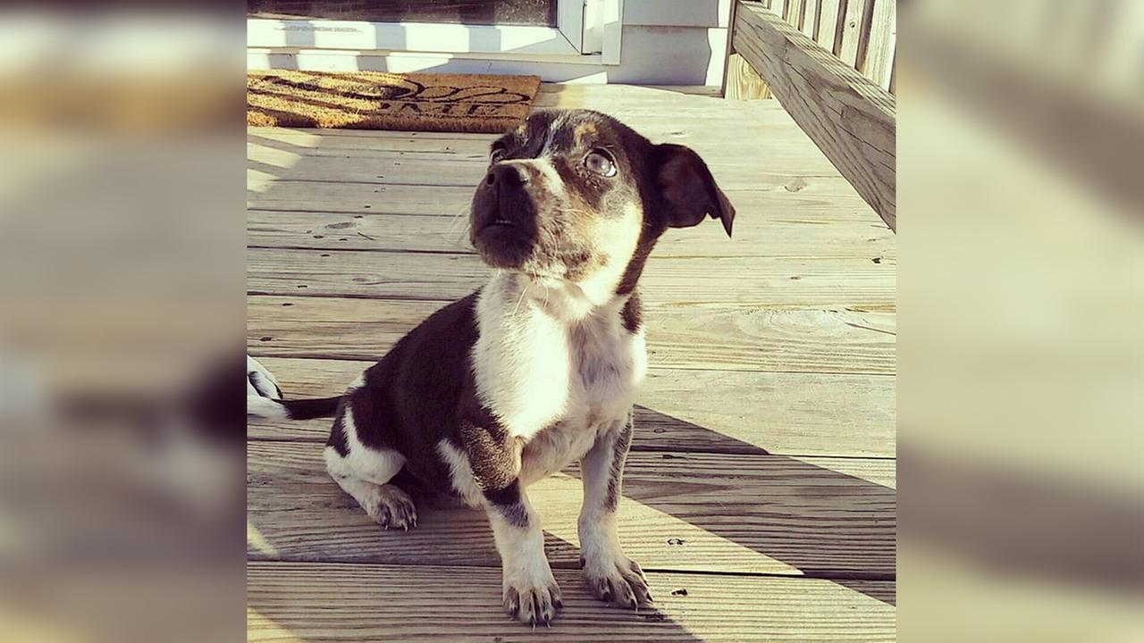 Charlee was stolen from a car in Garner