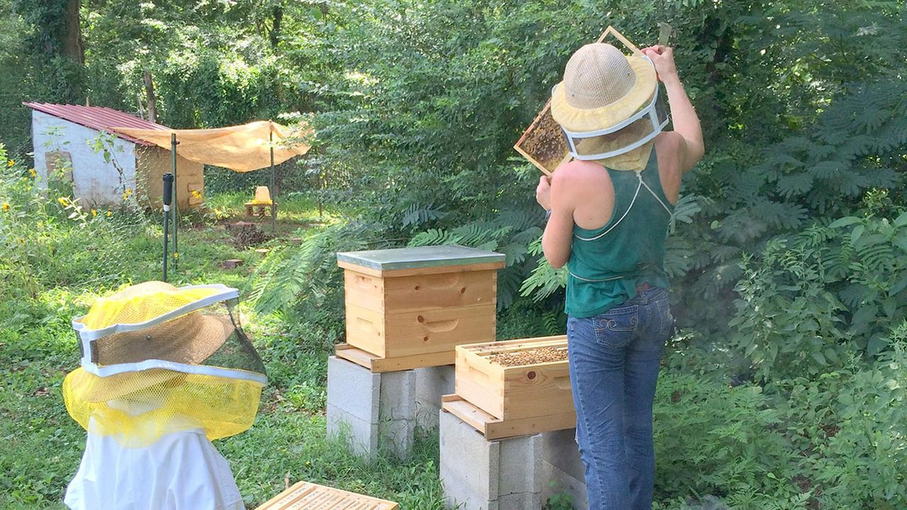 Bee keeping at Well Fed Community Garden