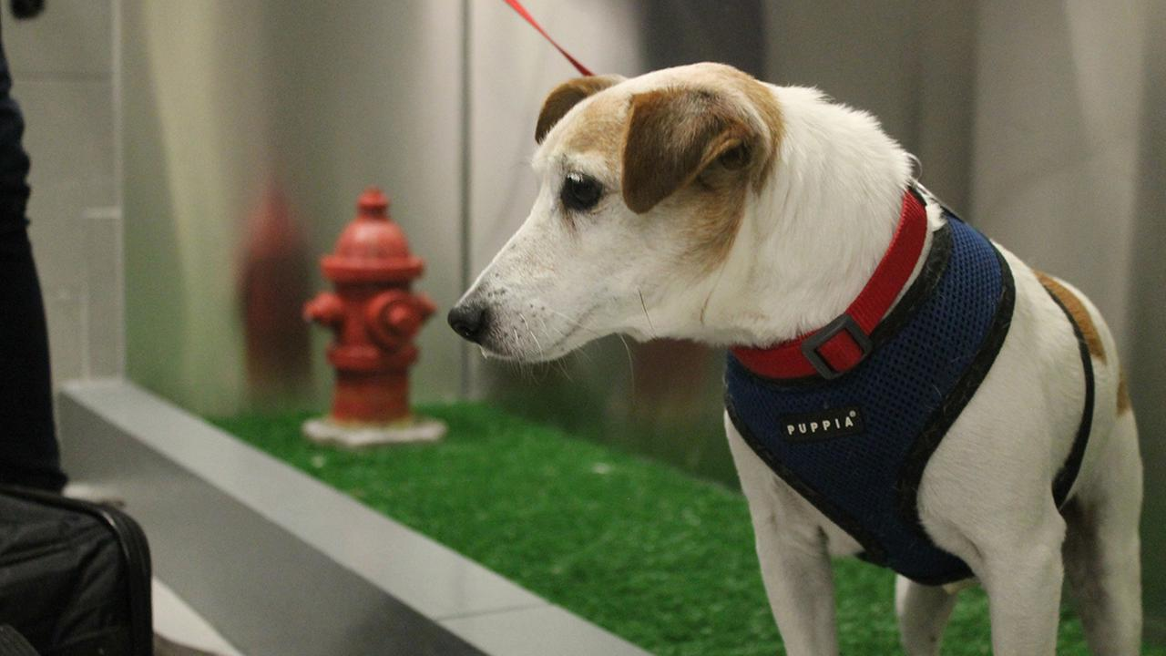 A new pet relief area has opened in the international air terminal at JFK to help passengers taking their dogs on a long flight.