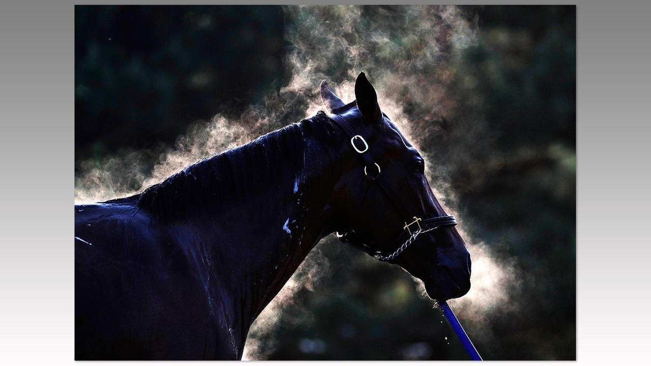 Steam surrounds a horse as he gets a bath after a morning workout at Churchill Downs on Friday, May 6 in Louisville, Ky.Charlie Riedel