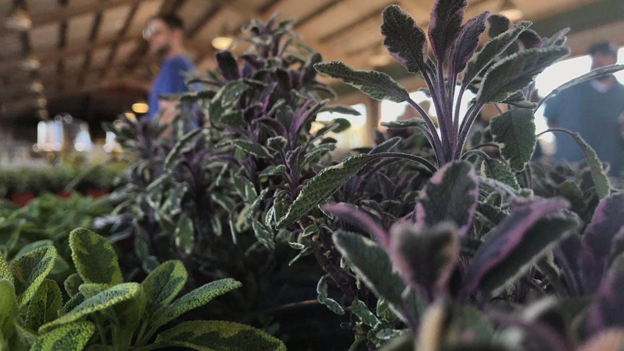 Plants at the Raleigh Farmers Market