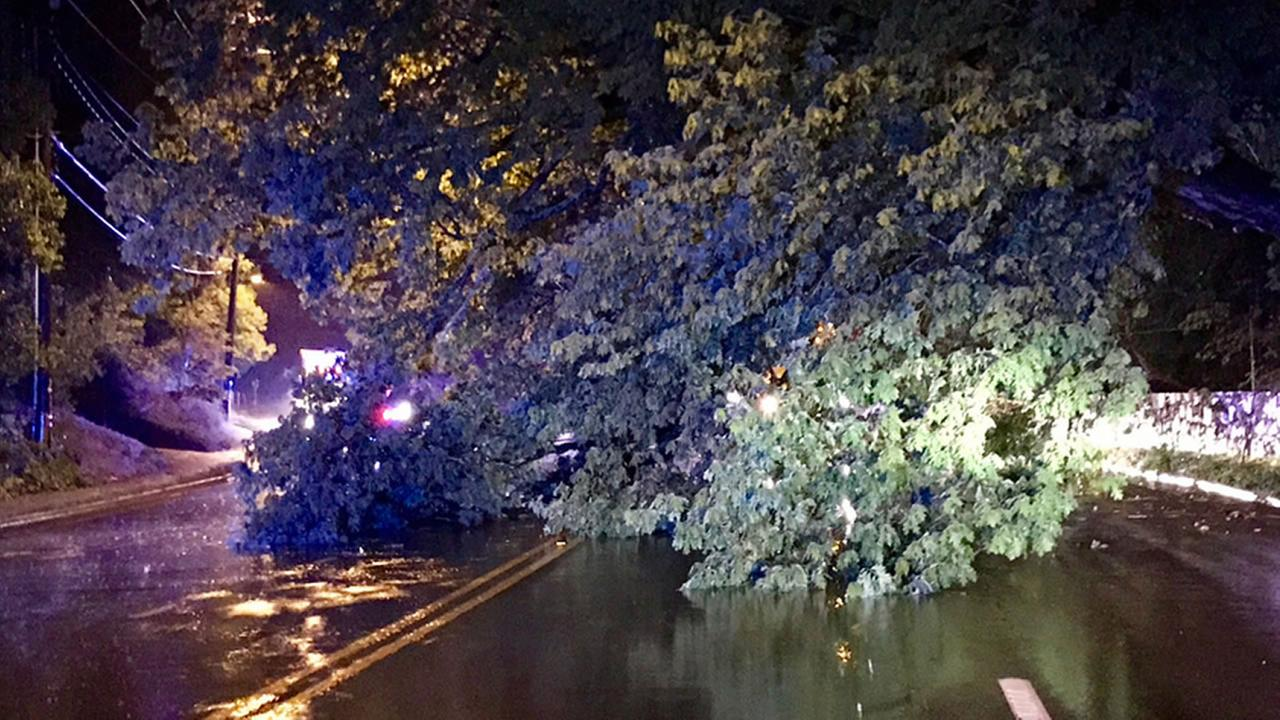 A tree down in Chapel Hill