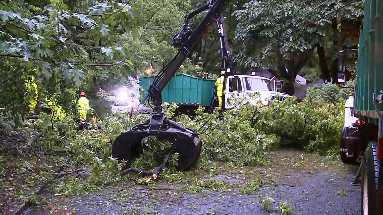 Tree down in Durham