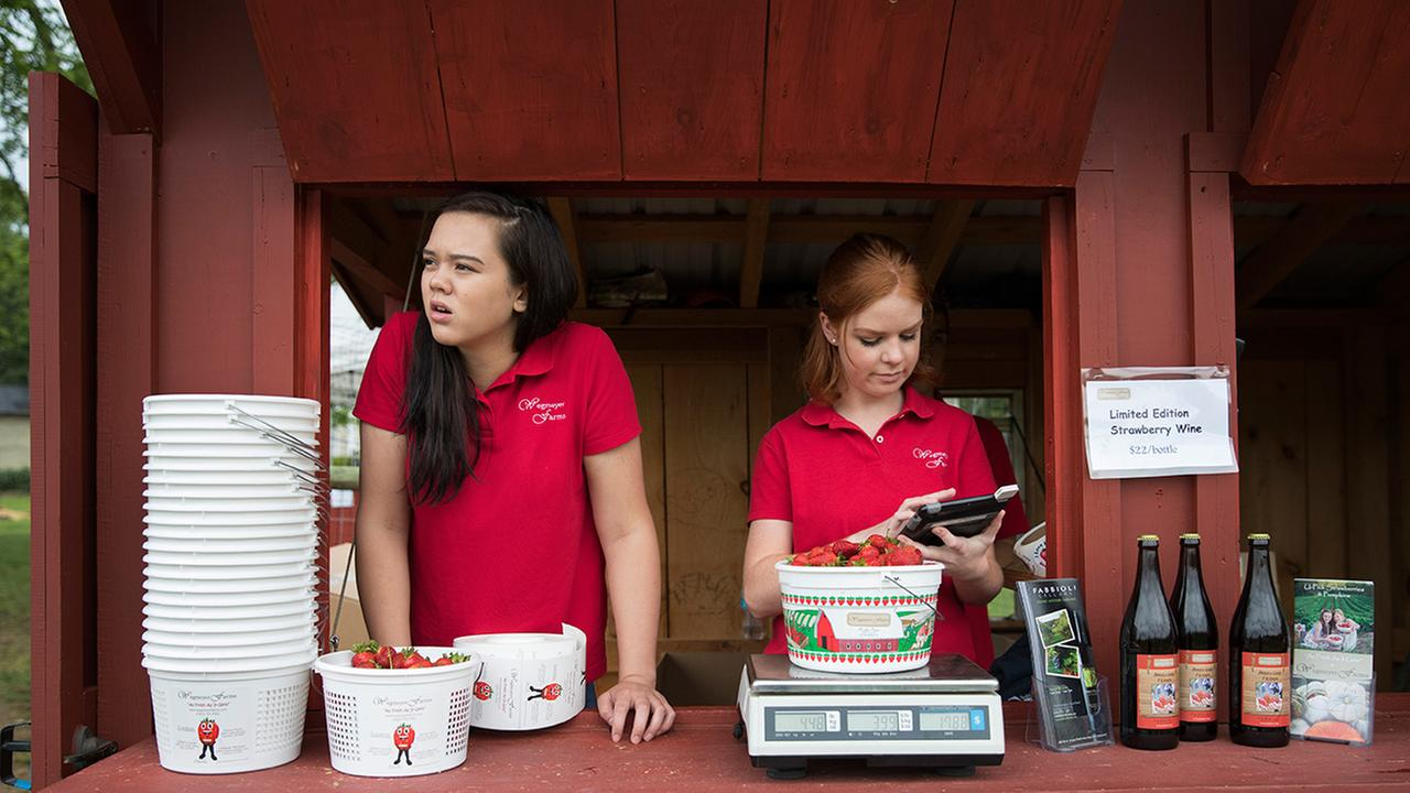 Hannah Waring, left, a student at Loudoun Valley High School, and Abby McDonough, a student at Liberty University, work in the strawberry stand at Wegmeyer Farms in Hamilton, Va.