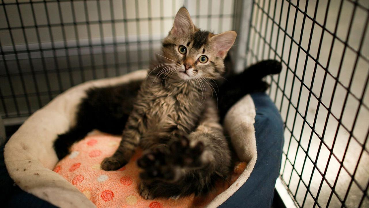 Looking to adopt a cat? Check out these Raleigh adoption events