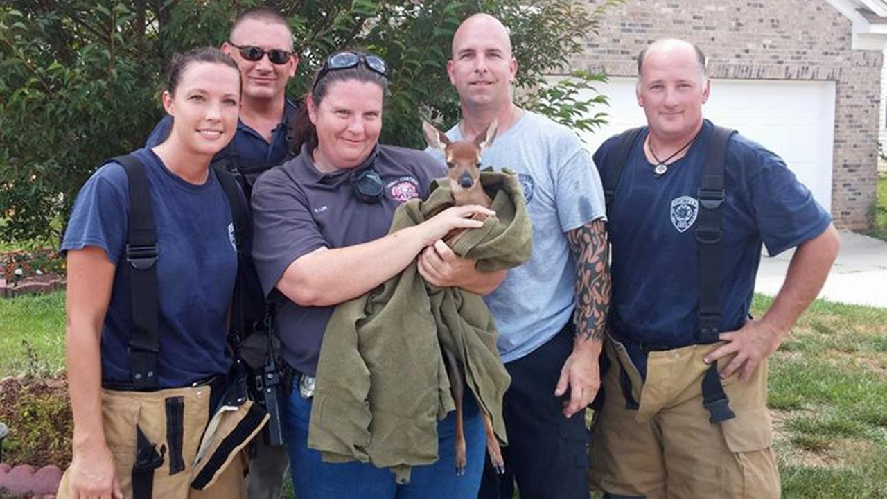 Clayton firefighters rescued a baby deer from a storm drain