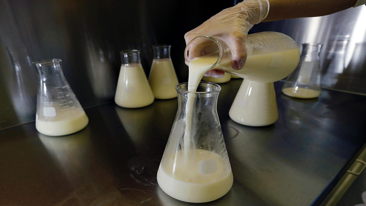 A lab technician pours breast milk into a flask