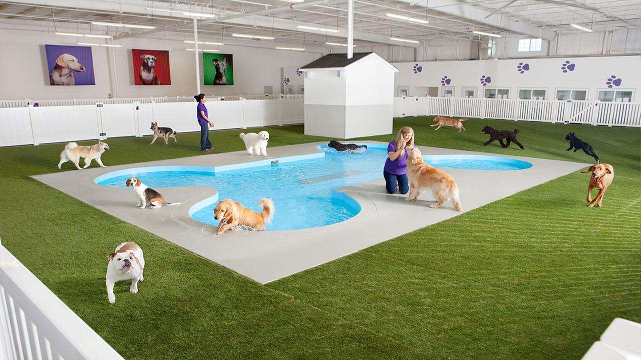 Artist rendering of Paradise 4 Paws, a holding area for dogs in a new luxury terminal at New Yorks John F. Kennedy International Airport