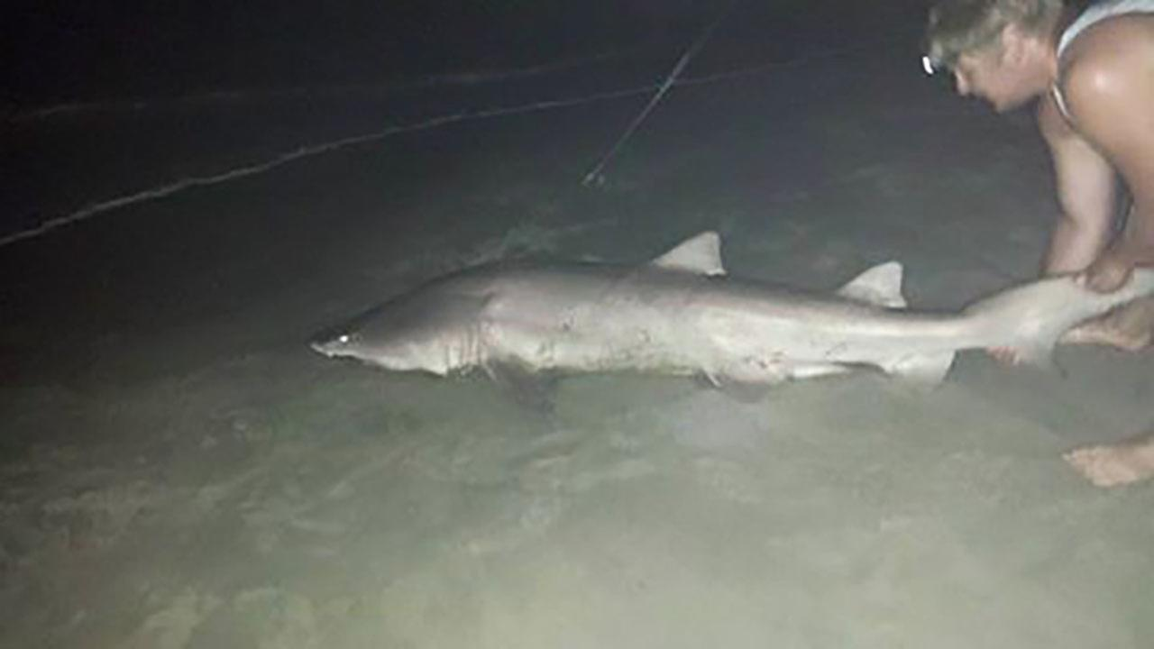 An ABC11 Eyewitness captured the moment a large shark was caught on the Outer Banks