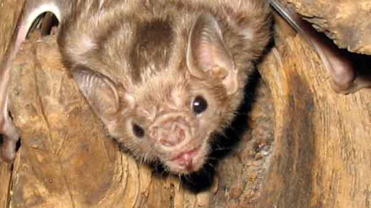 bat generic image