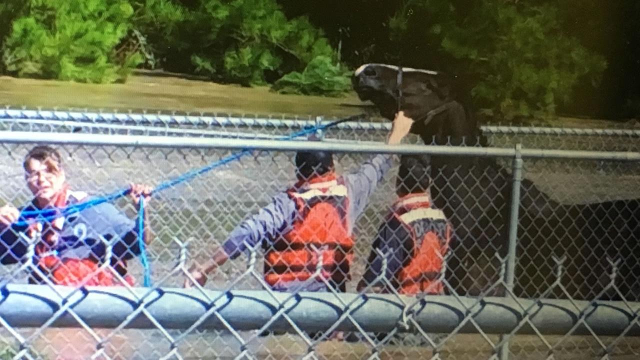 The Cumberland County Swift Water Rescue Team saves Bob from high water