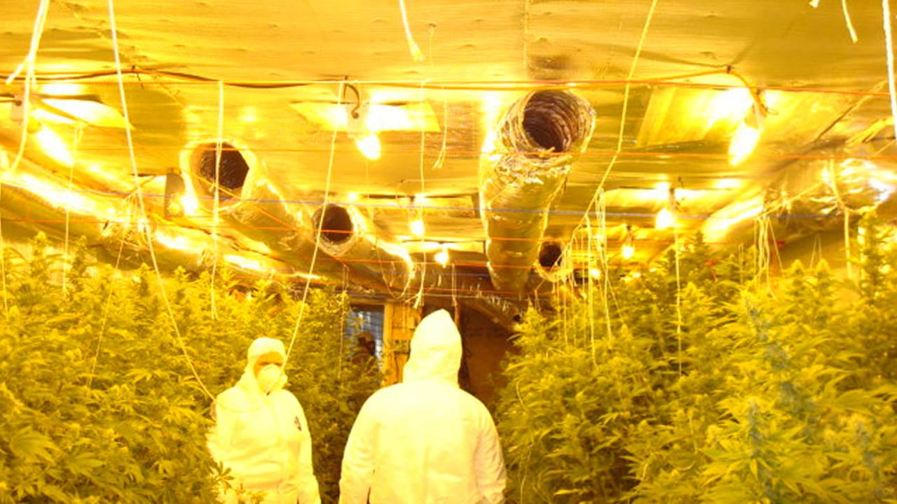 Moore County deputies uncover a large indoor marijuana growing operation.image courtesy Moore County Sheriff's Office