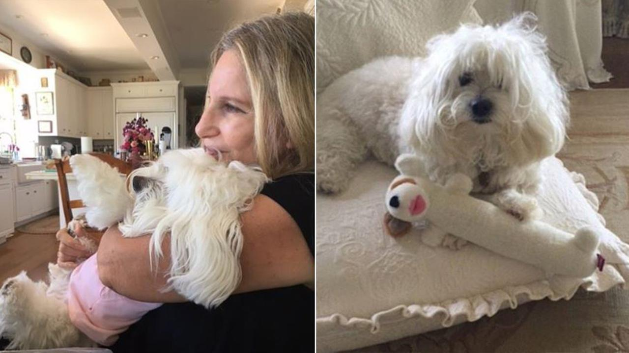 Barbara Streisand's dog dies, was her companion for 14 years