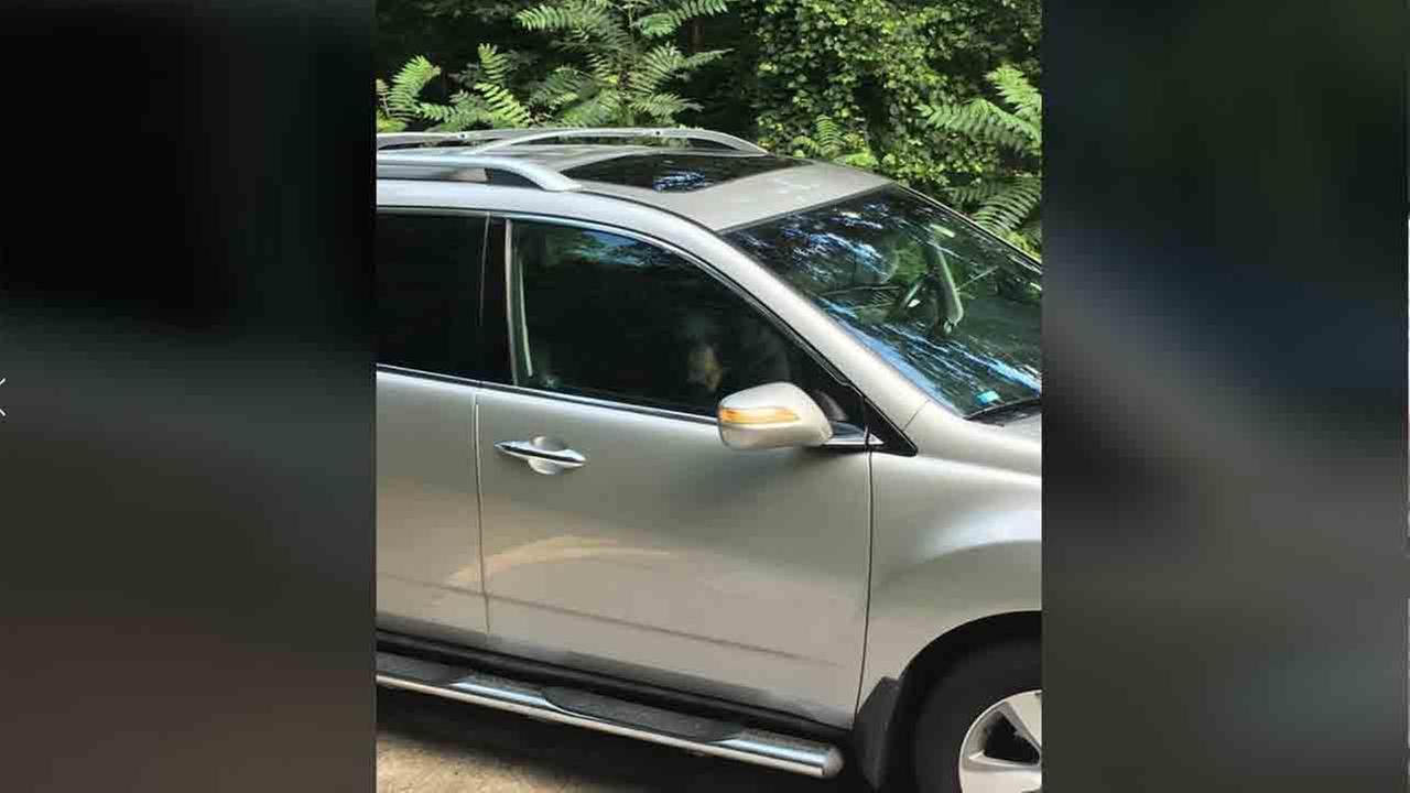 Bear locks itself inside car, totals it from the inside out