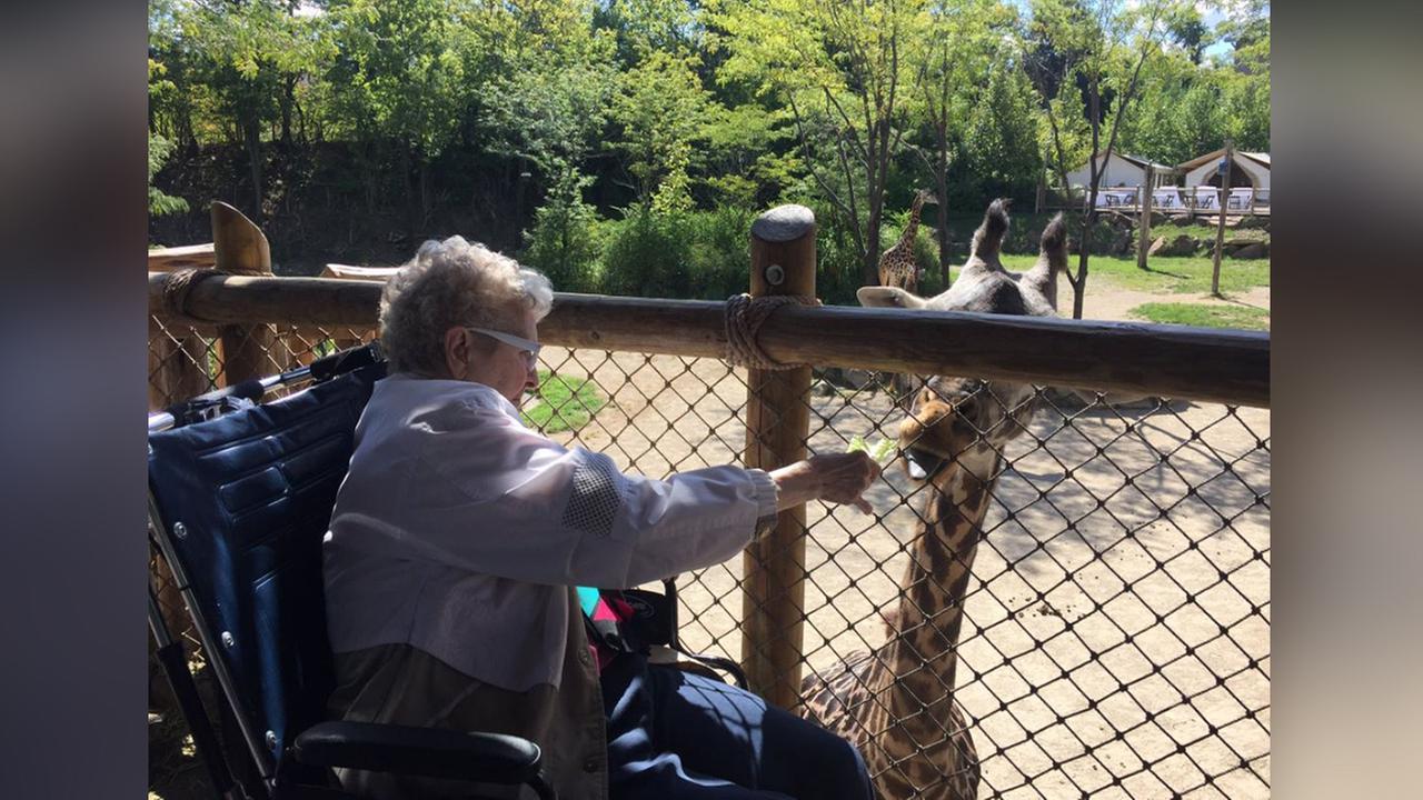 Illinois grandma fulfills dying wish, feeding giraffes