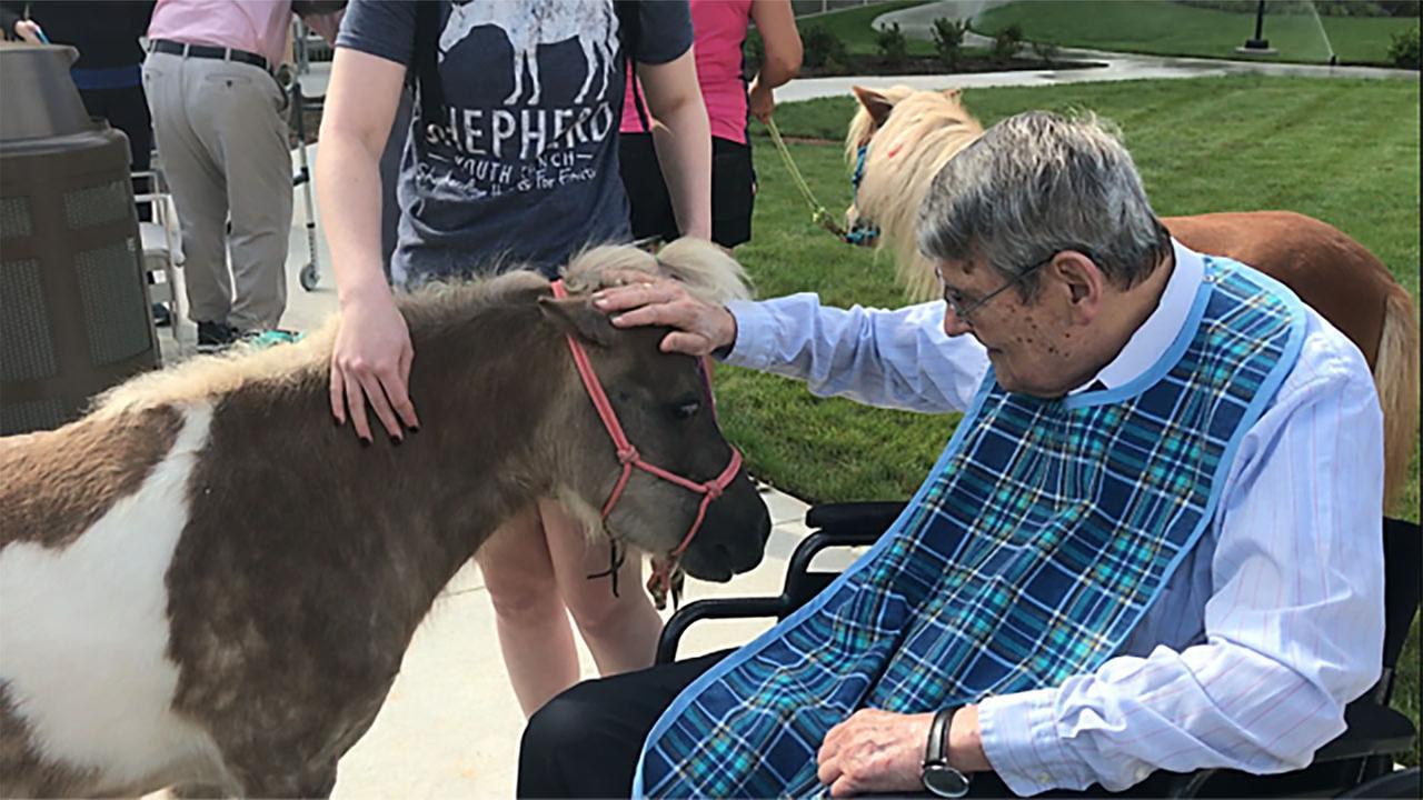 Mini horses comfort, bring smiles to seniors