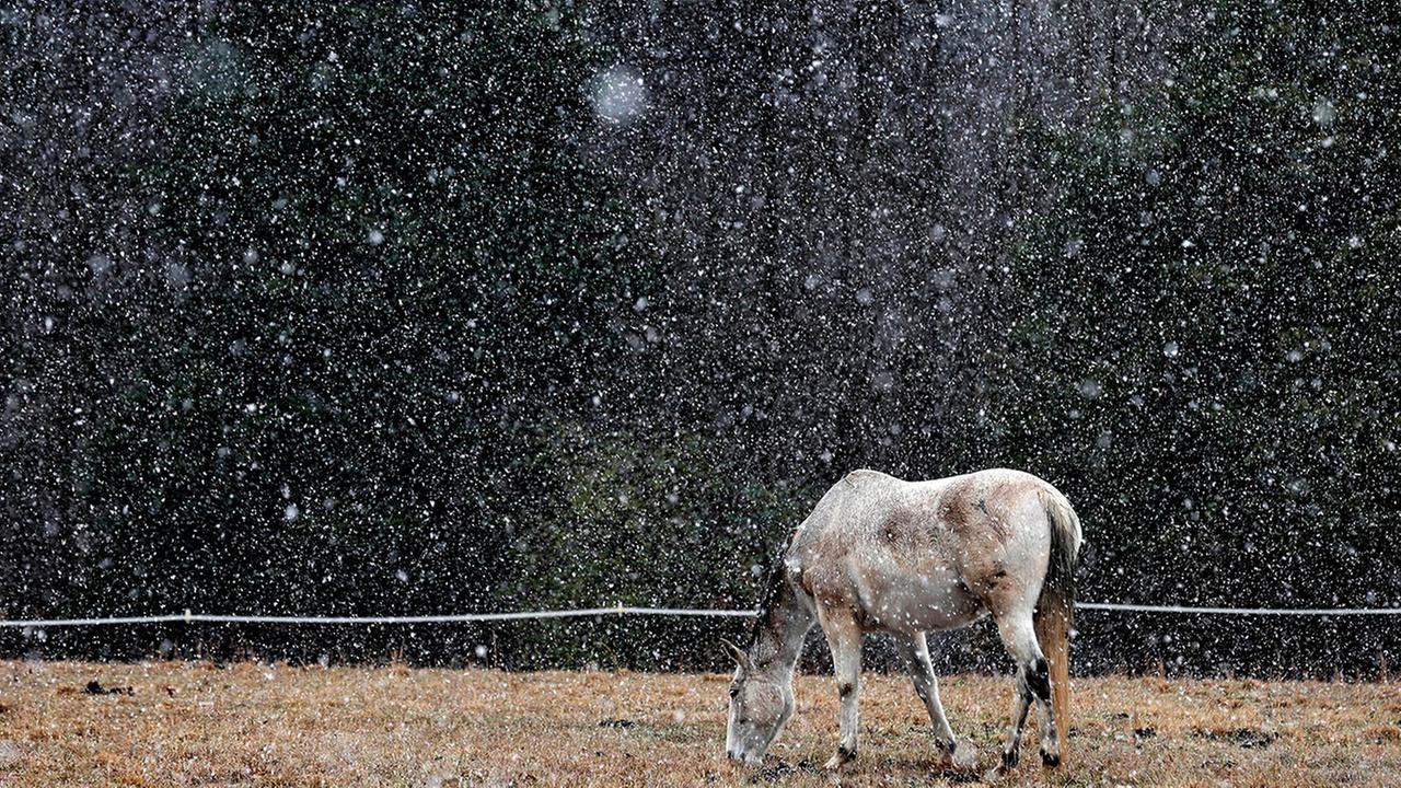 A horse grazes during a snow shower in rural Orange County near Hillsborough on Friday.  Gerry Broome