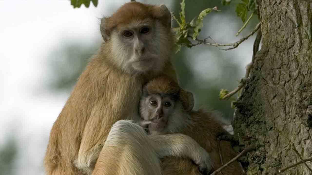 Monkeys die in fire at Woburn Safari Park