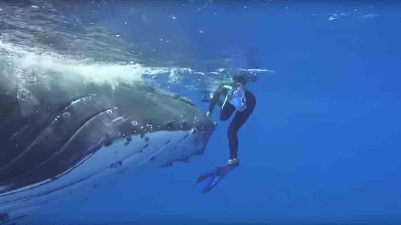 Nan Hauser claims this whale saved her from a shark