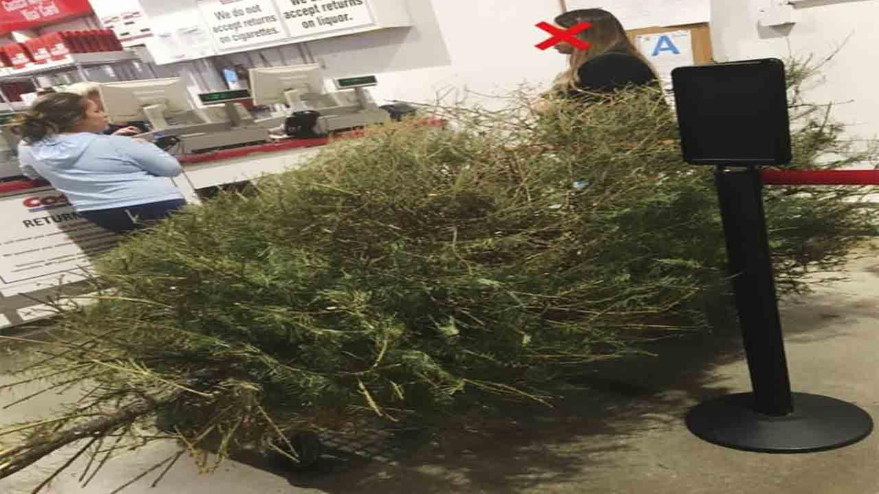 Scott Bentley said he was irate after watching a woman return a dead Christmas tree for a full refund