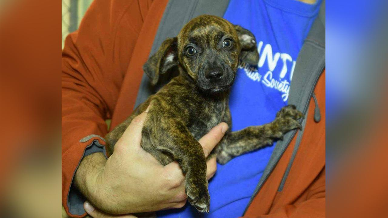 Durham shelter asking for stolen puppy to be returned