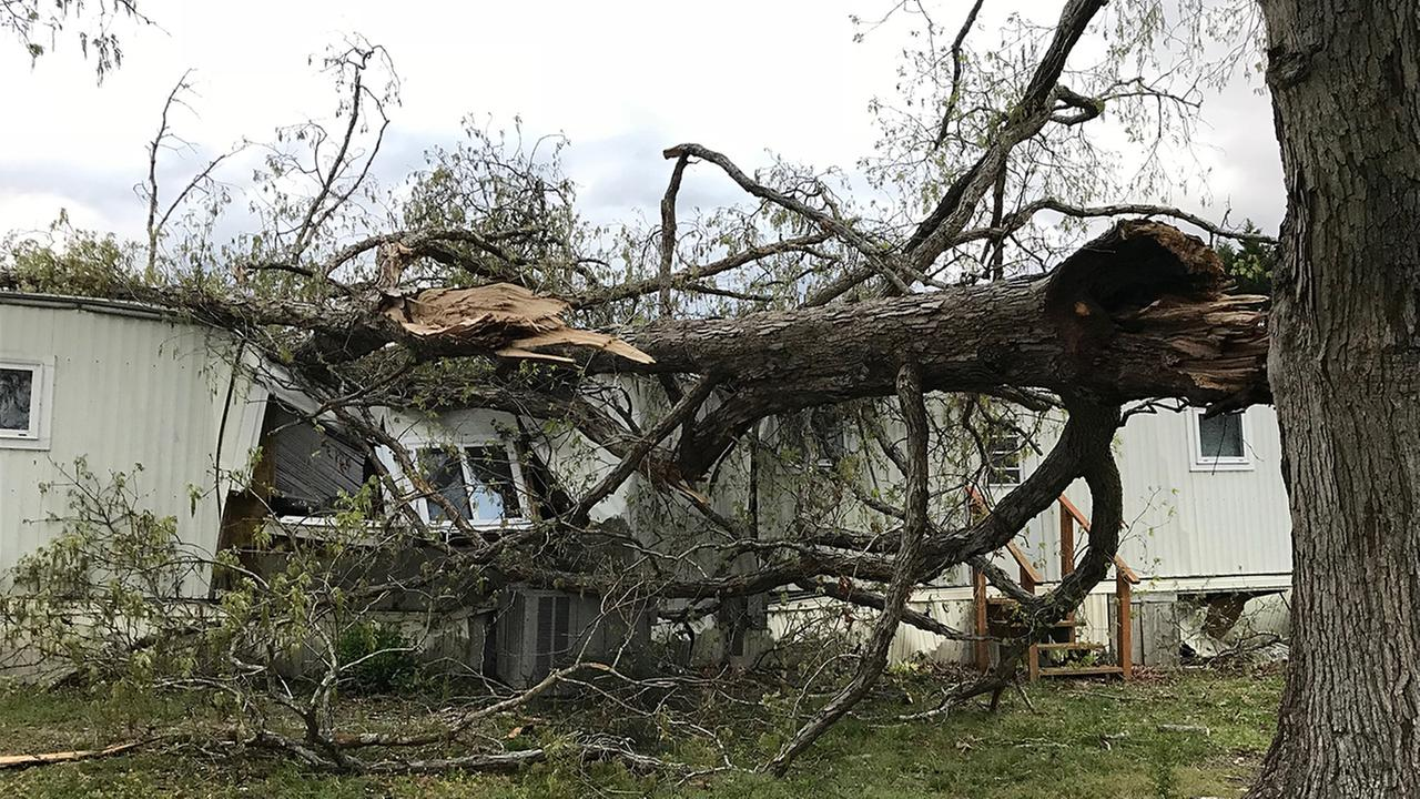 A tree narrowly missed a woman in her living room as it crashed through the homes roof.
