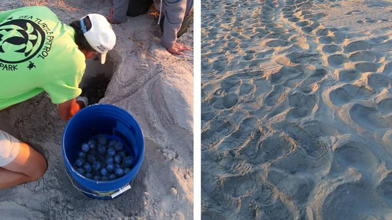 Sea turtle nesting season begins; how you can help protect them