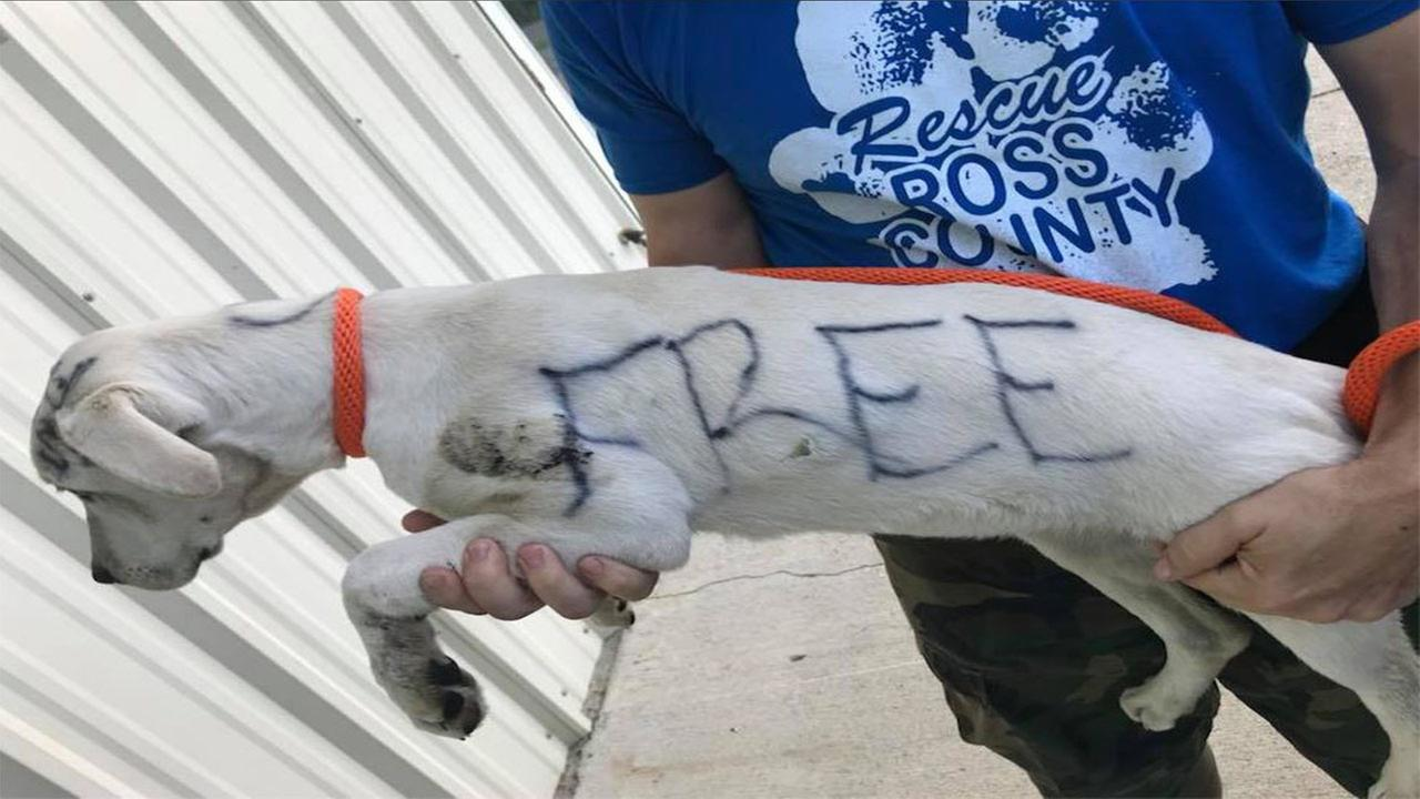 Puppy that had FREE written on fur put up for adoption