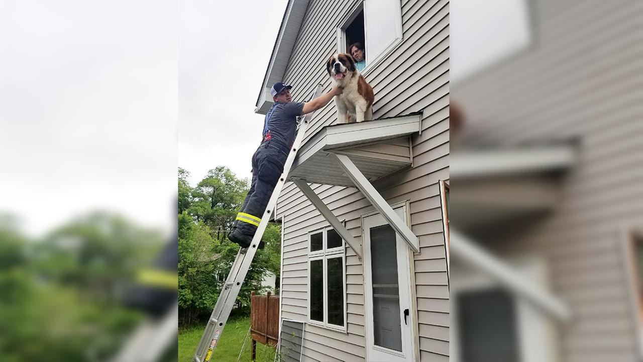 Whiskey was rescued from a small roof above a Minnesota home