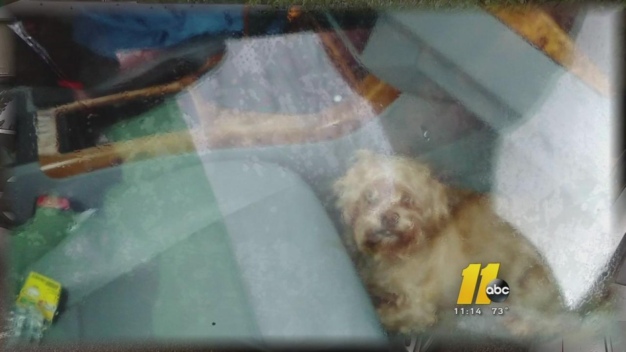 Dog rescued from locked SUV