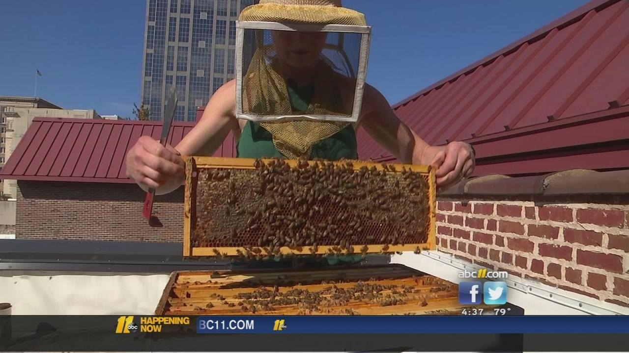 The secret life of city bees
