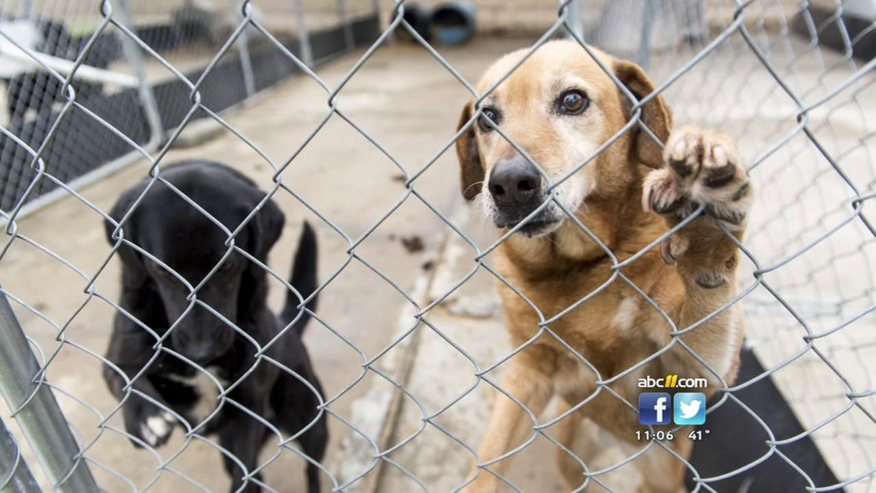 About 600 animals are being removed from an unlicensed Hoke County center.