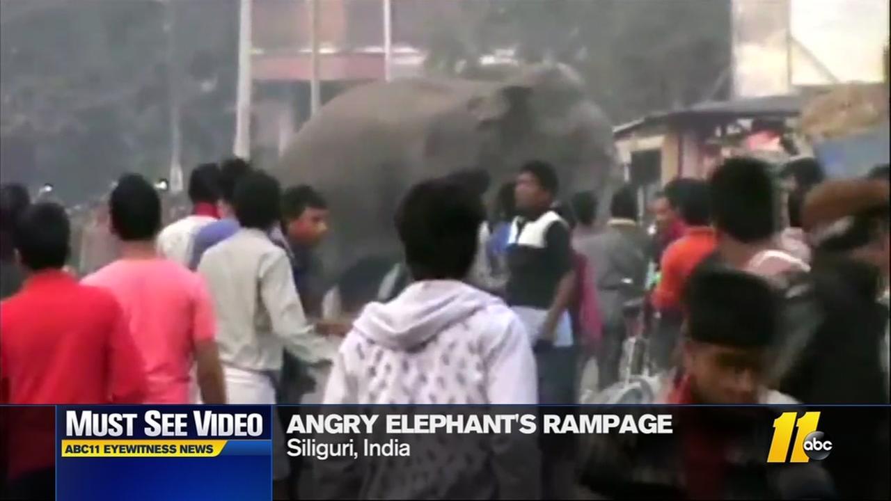 Angry elephants rampage