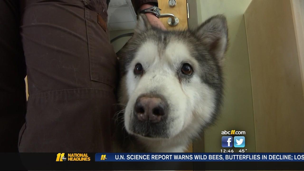 Deputy adopts rescue dog