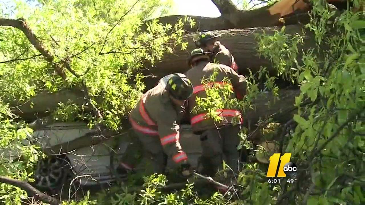 2 injured after tree falls on car