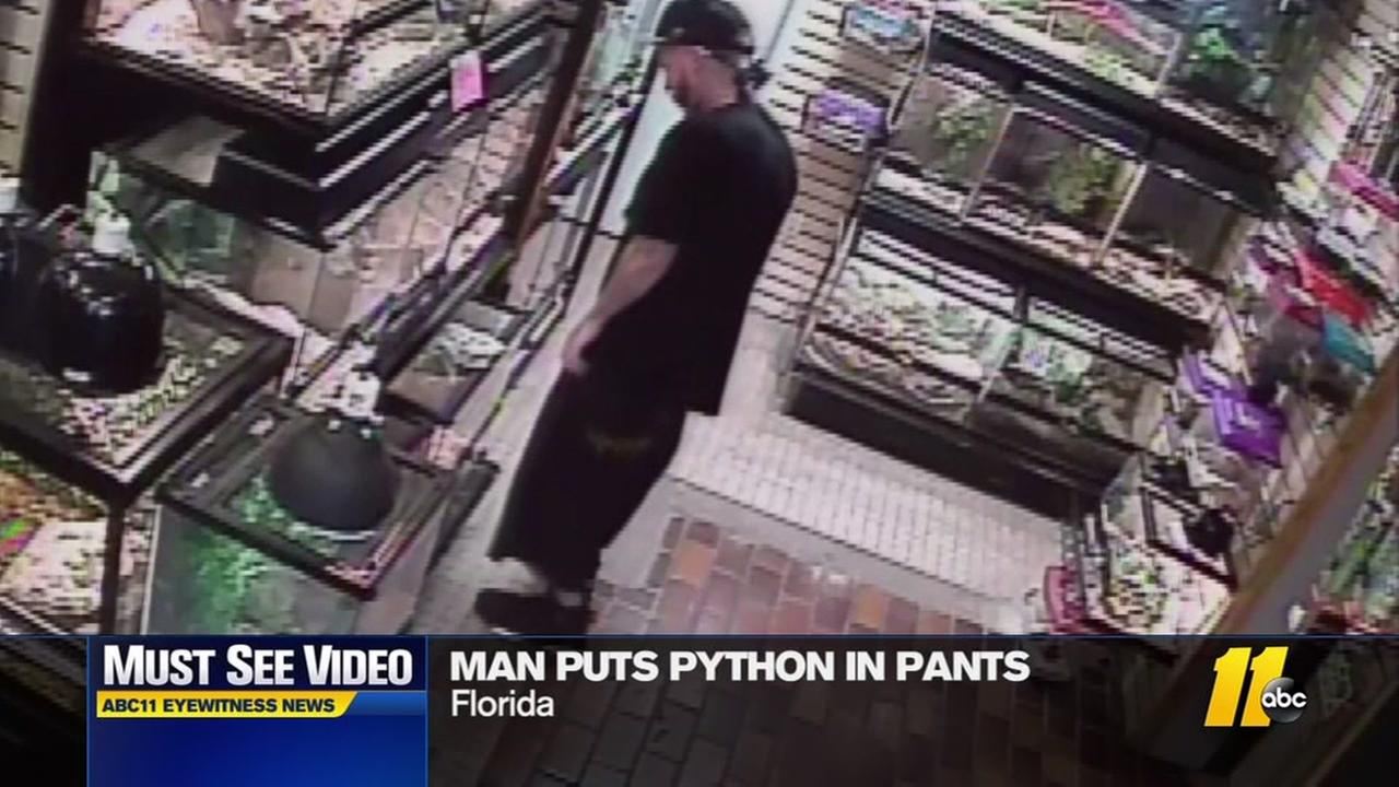 Man puts python in his pants