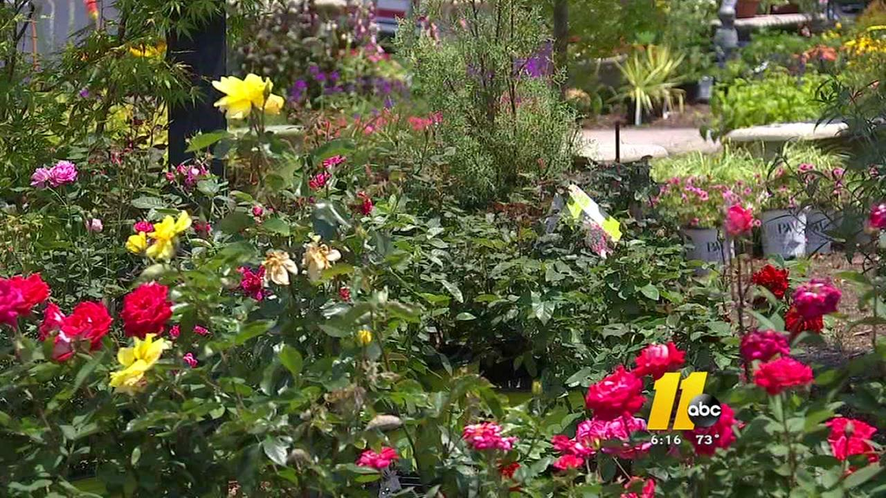 Garden theft