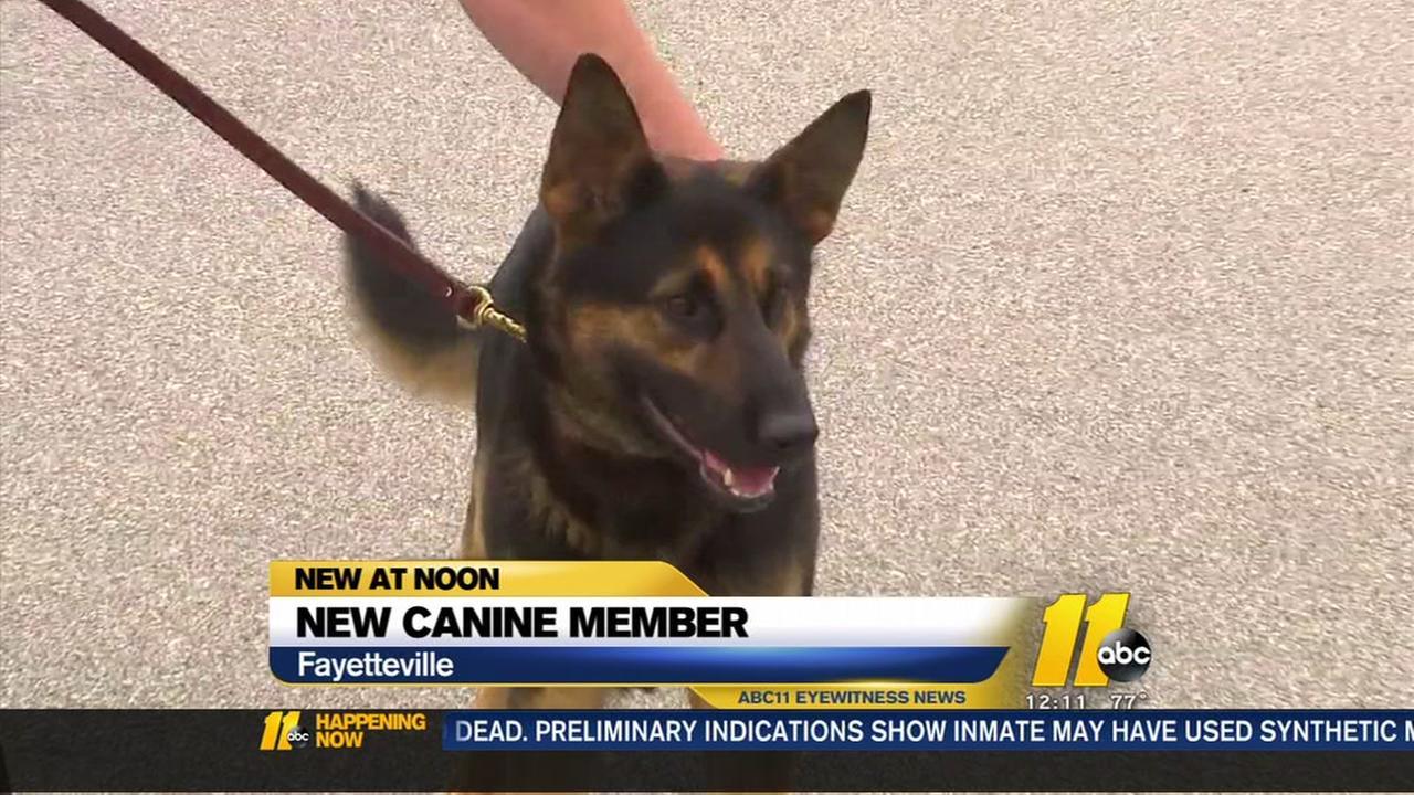 Deputies welcome new canine