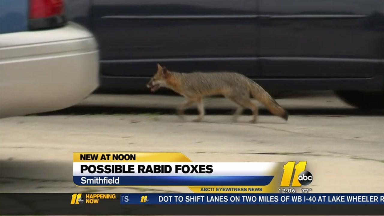 Two bitten by rabid fox in Smithfield