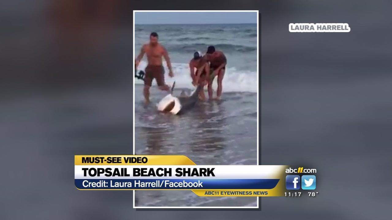 Topsail Beach shark