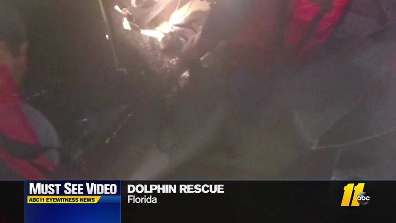 Coast Guard rescues dolphin