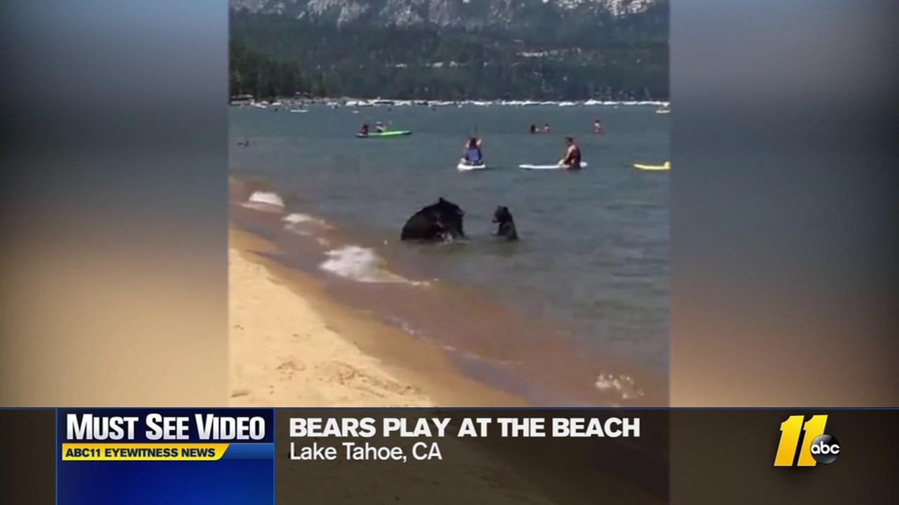 Watch - Bears play at the beach