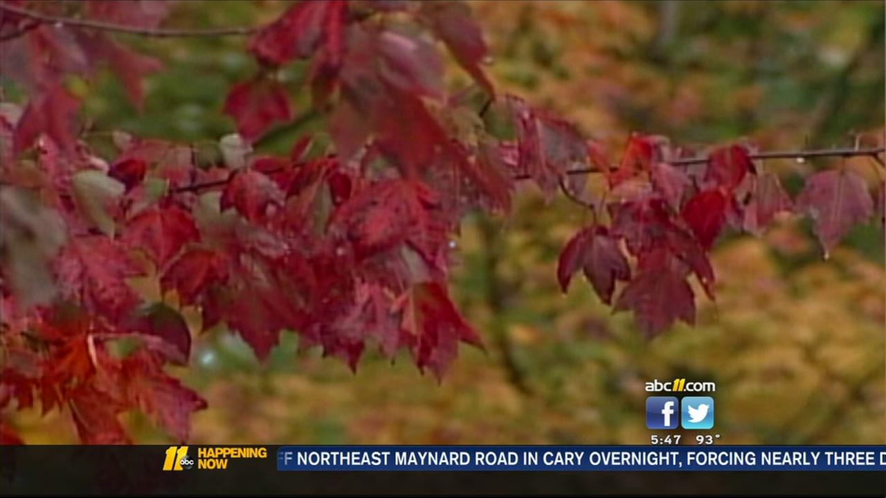 Warm temps could impact fall foliage