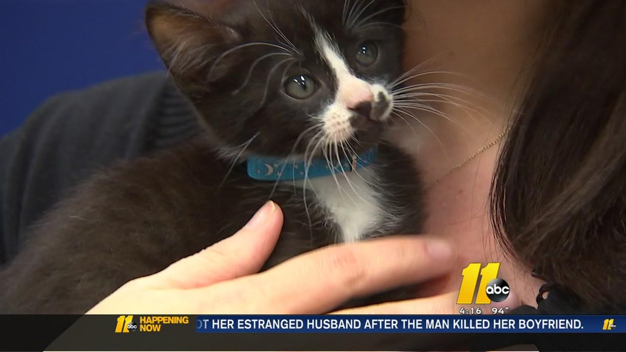 FPD employee saves kitten in distress