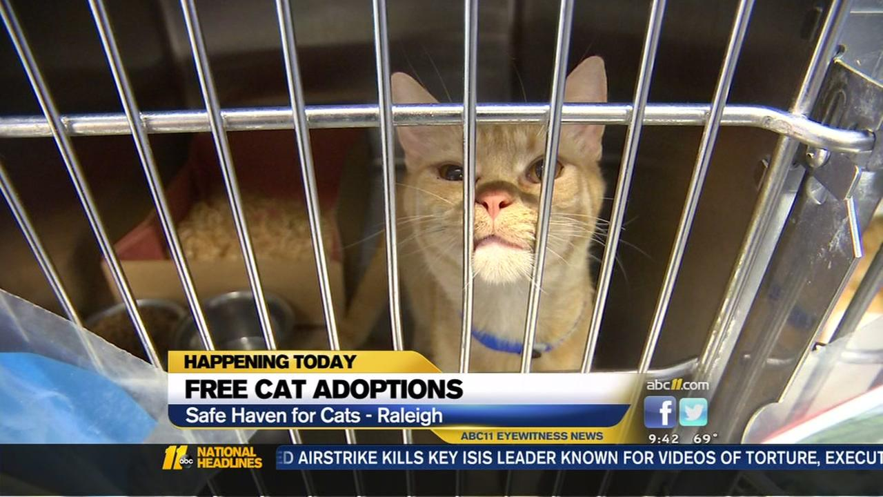 Free cat adoptions in Raleigh