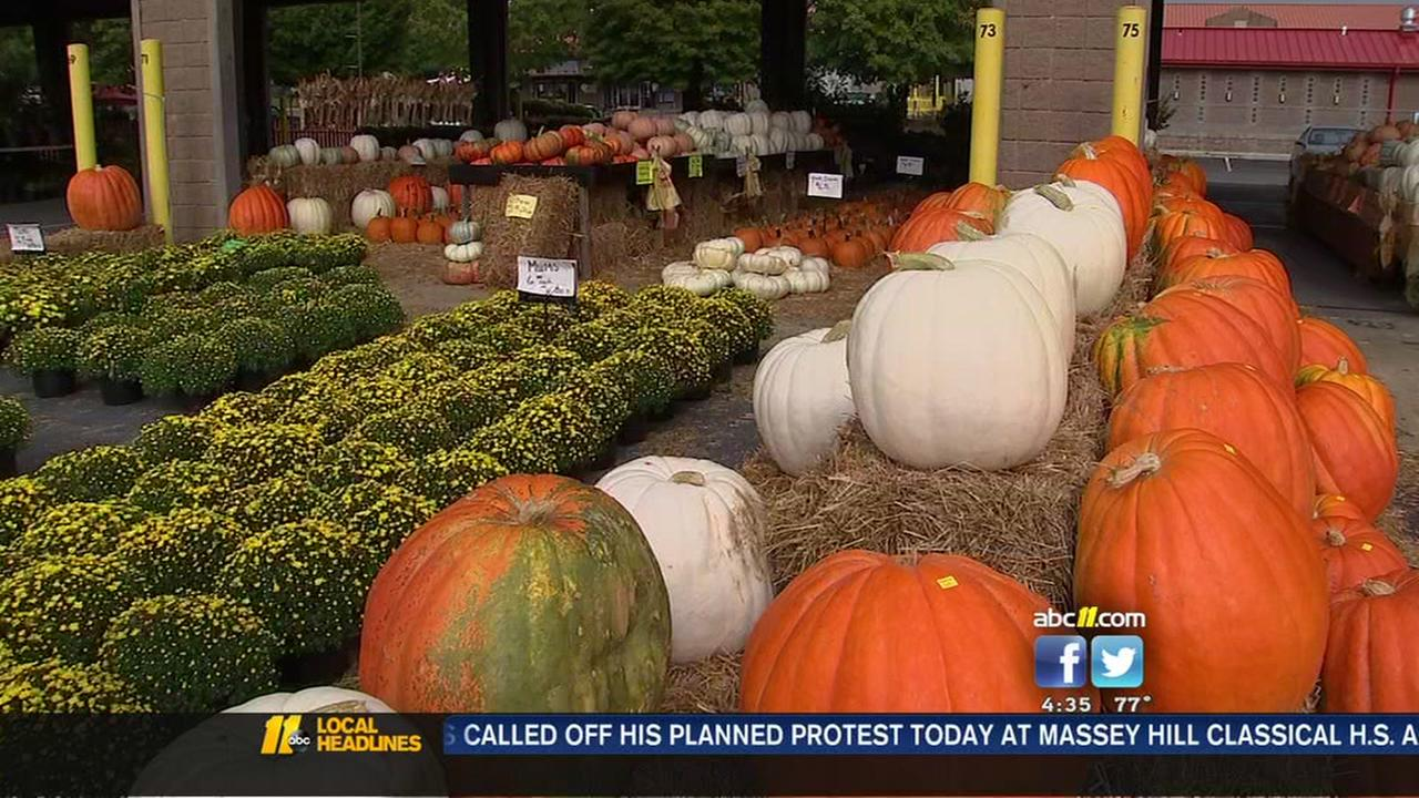 Pumpkins back in season in North Carolina
