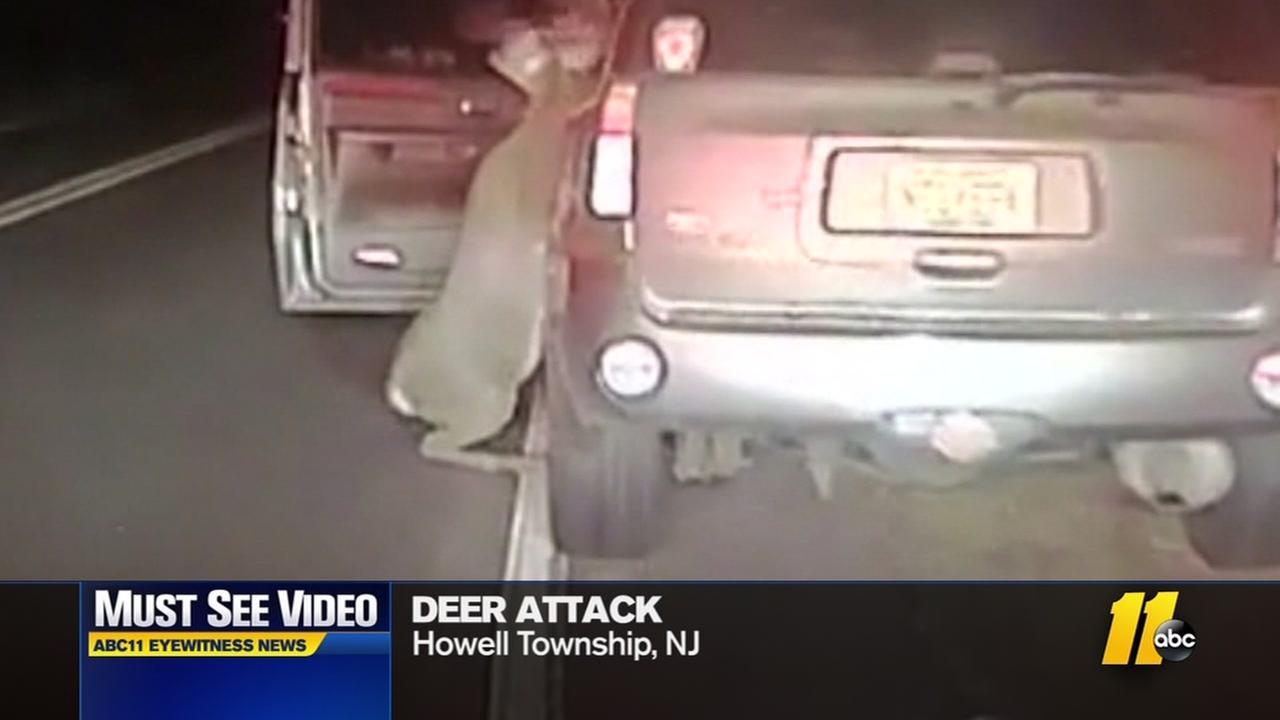 Deer climbs into drivers SUV